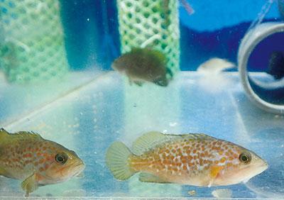 すごいで!大阪産の魚たち
